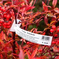 Бирка-петелька для растений 15х209 мм 3000 шт